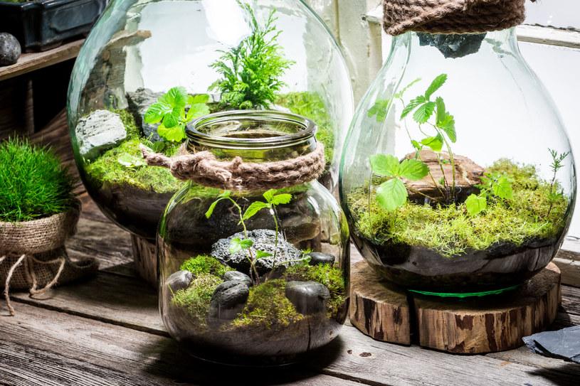 Do słoika możemy włożyć kilka różnych roślin, wedle upodobania /123RF/PICSEL