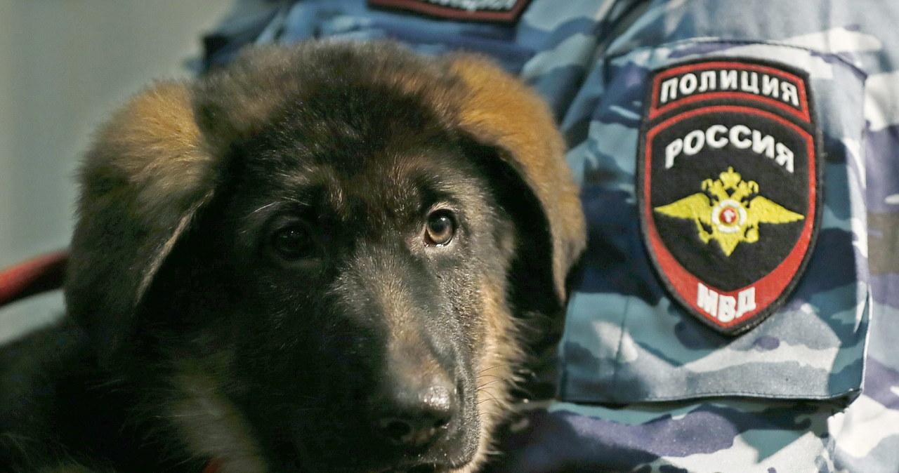 Dobrynia - dar Rosjan dla francuskiej policji
