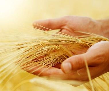Dodatki do żywności mogą powodować tycie