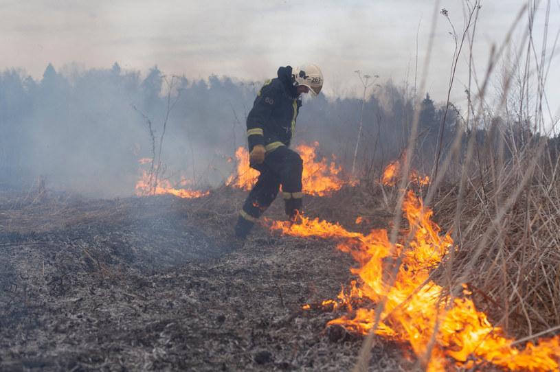 Dodatkowe kary dla wypalających łąki! /123RF/PICSEL
