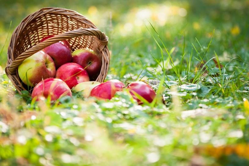 Dojrzałe jabłka zawierają dużo witaminy C /123RF/PICSEL