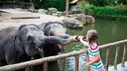 Dokarmianie zwierząt w zoo może prowadzić do tragedii!