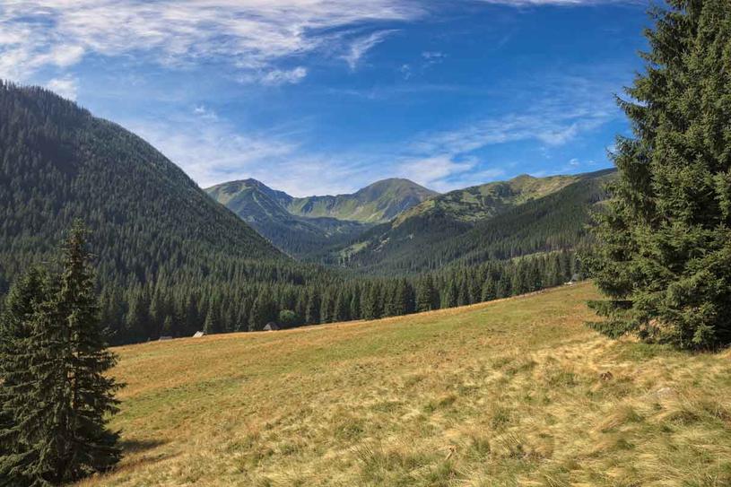 Dolina Chochołowska. Najdłuższa i największa dolina w polskich Tatrach. Znajduje się na terenie TPN, ale górale nadal mogą nią zarządzać ipaść tu owce /123RF/PICSEL