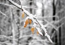 Dolny Śląsk: Nawet do 30 cm śniegu. IMGW wydał ostrzeżenie