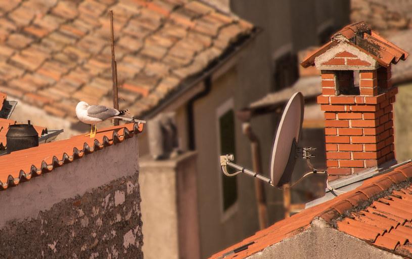 Domowa antena satelitarna - czy takie rozwiązanie się opłaca /123RF/PICSEL