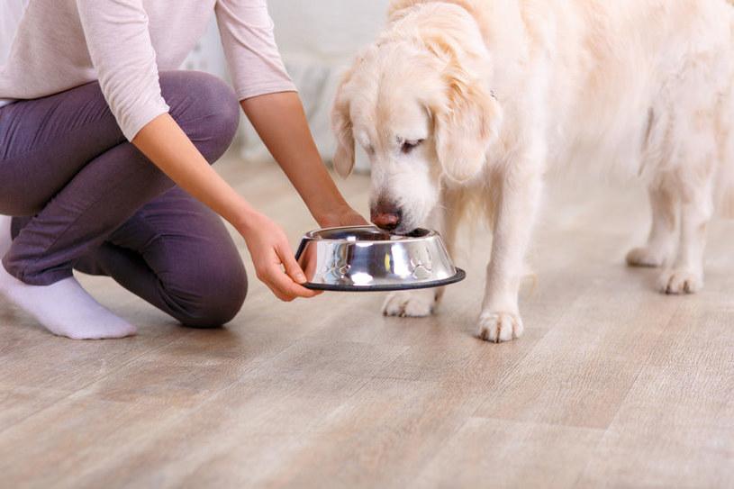 Domowe jedzenie może bardzo smakować psu /123RF/PICSEL