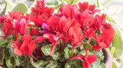 Domowe kwiaty w dobrej formie