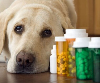 Domowe sposoby na artretyzm u zwierząt