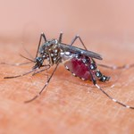 Domowe sposoby na odstrasznie komarów