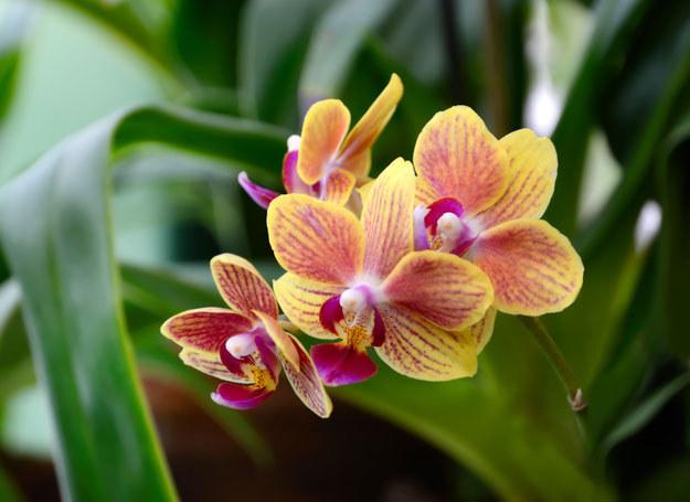 Domowe sposoby są idelane do pielęgnacji roślin /123RF/PICSEL