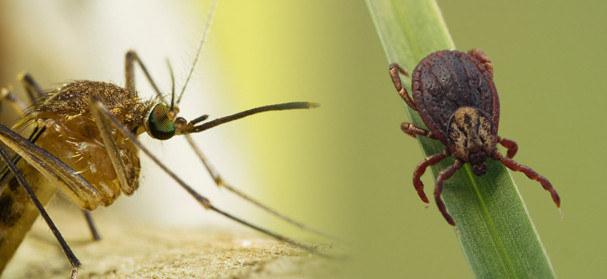 Domowy sposób na komary i kleszcze /© Photogenica