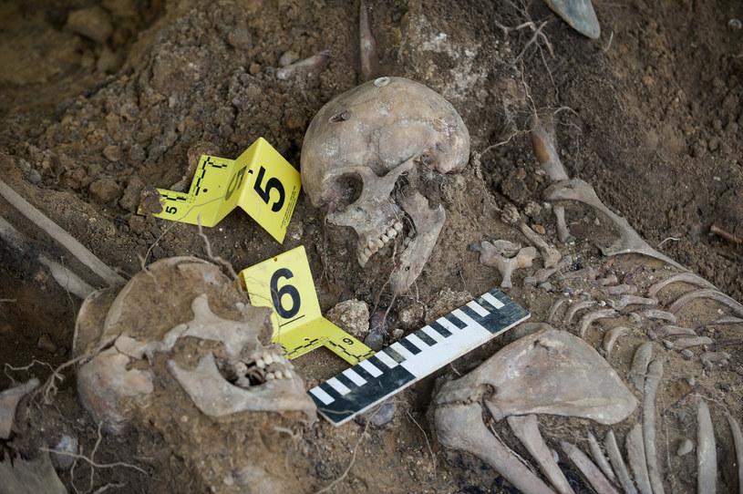 Dopiero od kilku lat odnajdywane są szczątki ofiar stalinowskich zbrodni /Michał Kość /Reporter