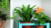 Dopieszczamy domowe rośliny
