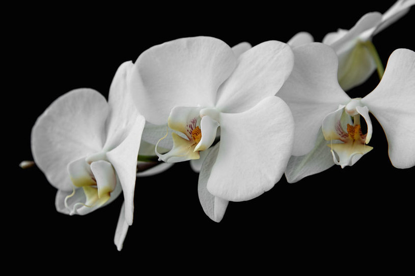 Dorodne kwiaty /©123RF/PICSEL
