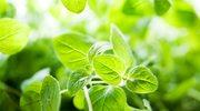 Dorzuć do sałatki nieco inną zieleninę