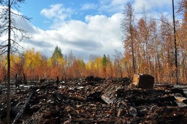 """Doszczętnie spalony barak. Pożary wybuchły w tym rejonie w sierpniu 2013 roku /arch. Projektu """"Dead Road 2013"""" /Odkrywca"""