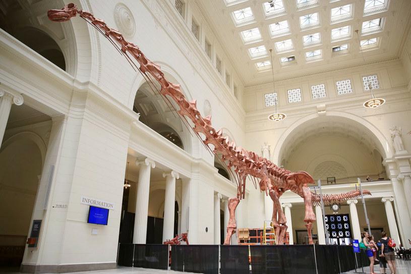 Dotychczasowy rekordzista, którego można podziwiać w Muzeum Historii Naturalnej w Chicago. Najnowsze odkryte szczątki są jeszcze większe! /East News