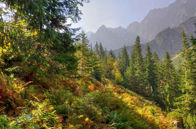 Dowiedz się więcej o tatrzańskiej przyrodzie /123RF/PICSEL
