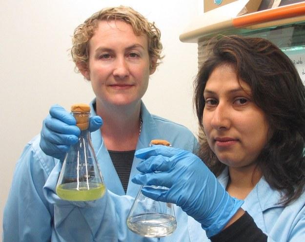 Dr. Sasha Tetu i Indrani Sarker w laboratorium Macquarie University / Macquarie University /Materiały prasowe