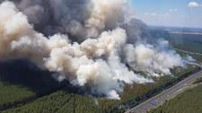 Dramatyczna walka z ogniem w niemieckiej Brandenburgii: Pożary objęły 150 hektarów!