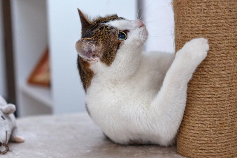 Drapak dla kota /©123RF/PICSEL