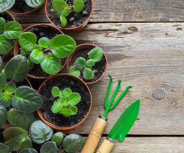 Drenaż do uprawy roślin: Jak go przygotować?