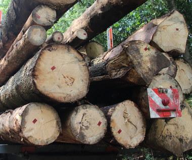 """Drewniane domy """"dla osób o przeciętnych dochodach"""". Sejm przyjął ustawę"""
