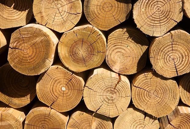 Drewno używane jest, poza produkcją papierniczą, również do produkcji materiałów budowlanych i mebli /© Panthermedia