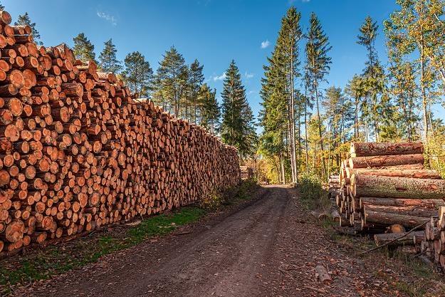 Drewno z polskich lasów jedzie za granicę. Tam płacą więcej /©123RF/PICSEL