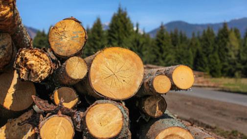 Drewno z polskich lasów trafi do elektrowni? Leśnicy forsują zmianę ustawy o OZE