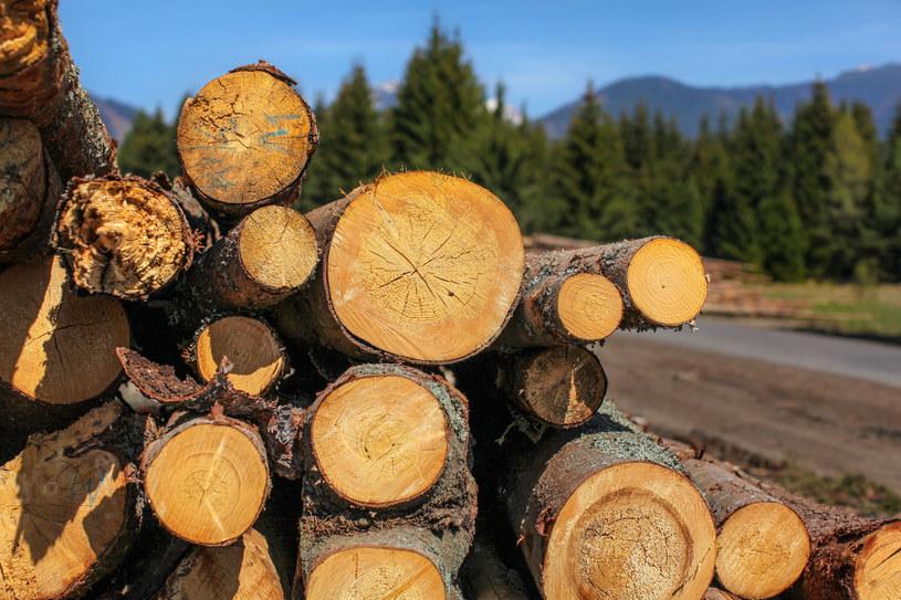 Drewno z polskich lasów trafi do elektrowni? /123RF/PICSEL