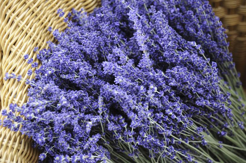 Drobne, delikatne kwiaty i zioła (wrzosy, lawenda) suszy się w pudełku zasypane /123RF/PICSEL
