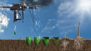 Drony będą sadzić drzewa