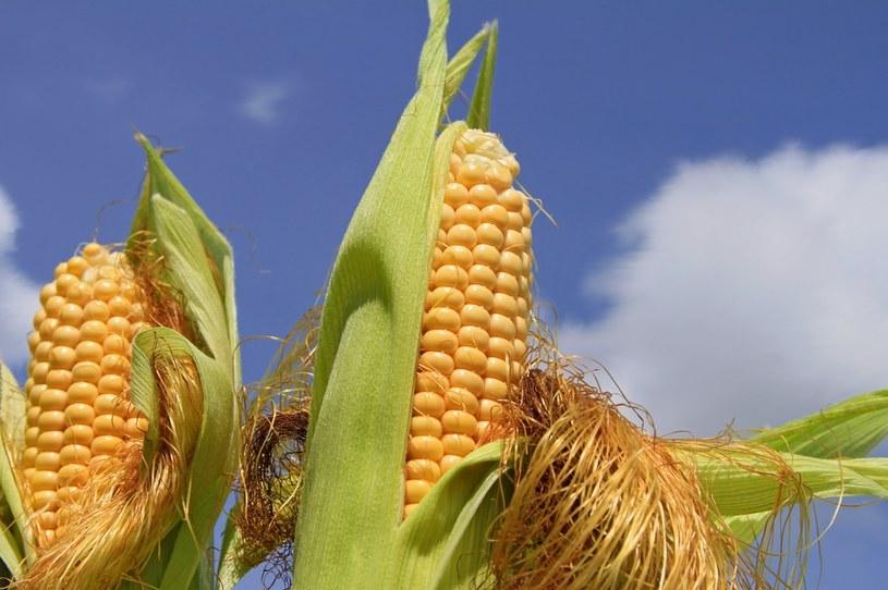 Drożejące produkty rolne sprzyjają ukraińskim spółkom z GPW /123RF/PICSEL