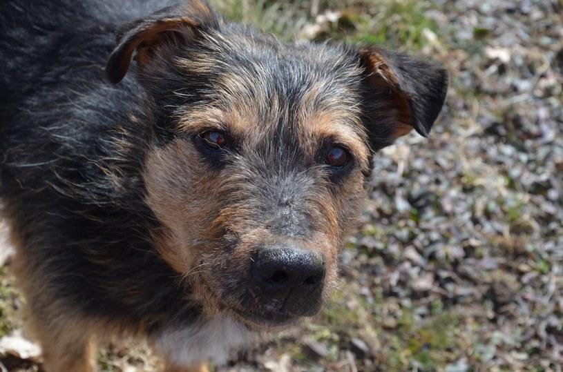 Drucika niestety nie ma już wśród nas, ale wiele innych psiaków czeka na swój dom /INTERIA.PL