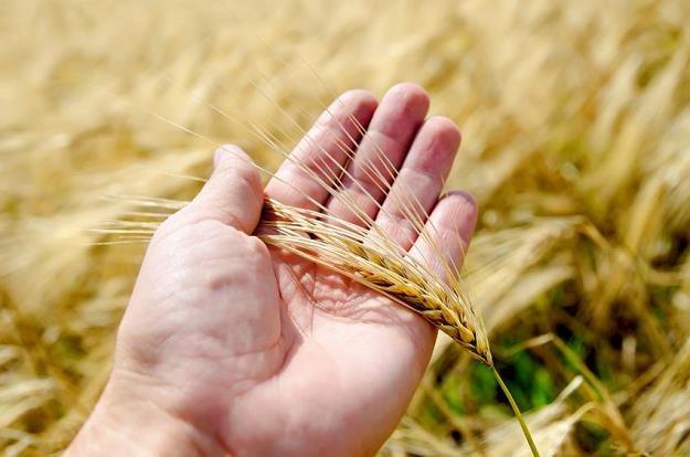 Druzgocący raport NIK ws. naszego rolnictwa /PAP