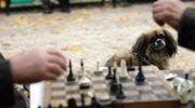 Drużynowe Mistrzostwa Polski kobiet w szachach