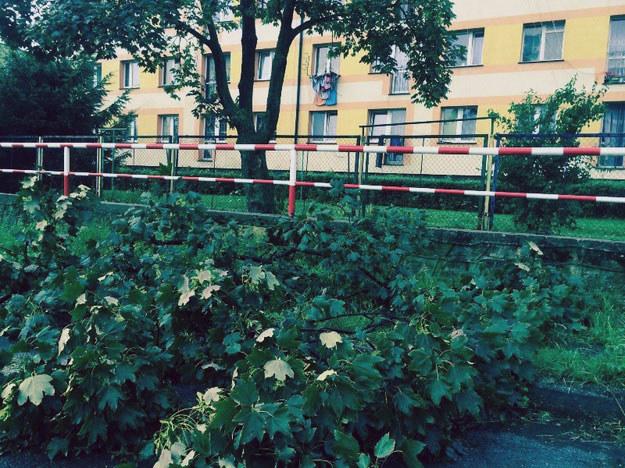 Drzewa blokują przejazd lokalnymi drogami /Bartłomiej Paulus /RMF24