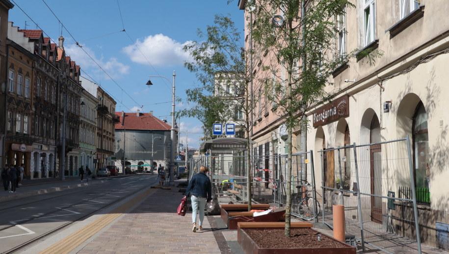Drzewa na ulicy Krakowskiej /Józef Polewka /RMF FM