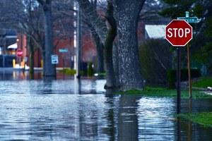 Drzewa ochronią przed powodziami