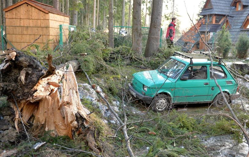 Drzewa powalone przez wiatr na jednej z poseji w Zakopanem /Grzegorz Momot /PAP