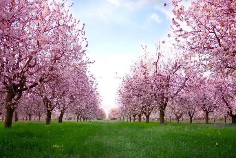 Drzewa skrywają tajemnice zmian klimatycznych /123RF/PICSEL