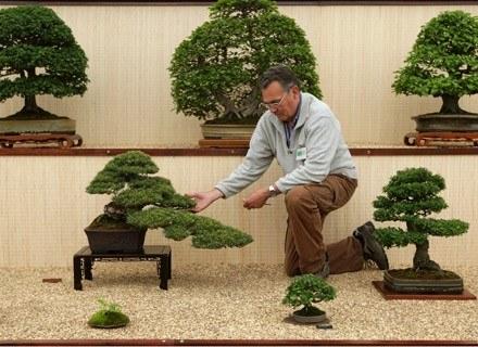 Drzewka bonsai /Getty Images/Flash Press Media