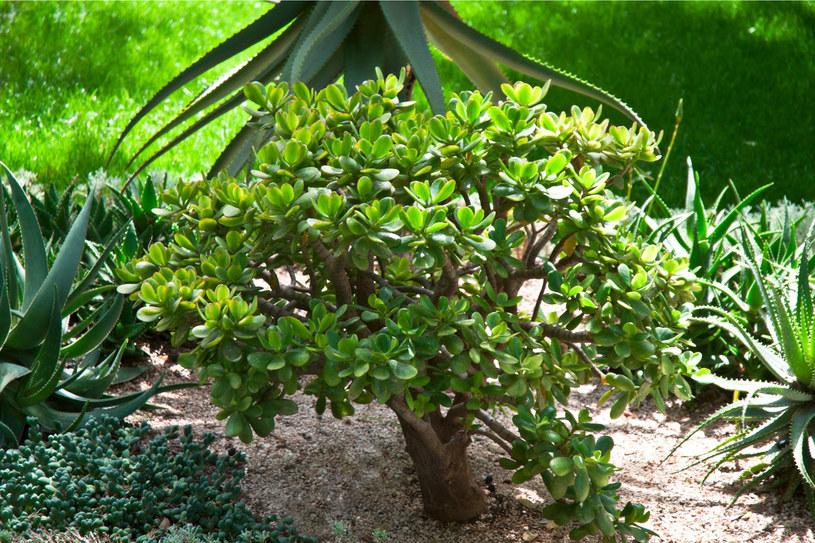 Drzewko szczęścia /123RF/PICSEL