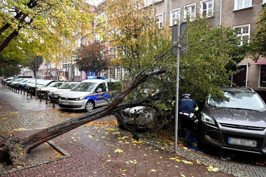 Drzewo na skutek silnego wiatru powaliło się na samochody / Adam Warżawa    /PAP
