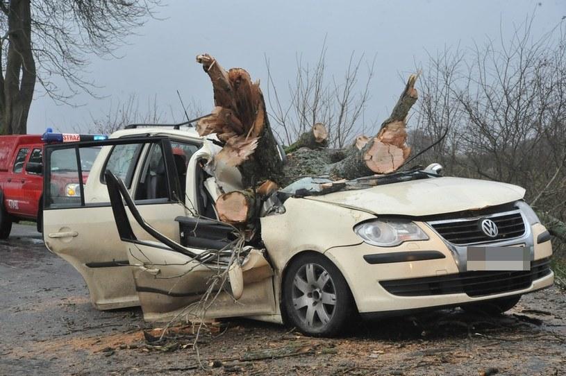 Drzewo przygniotło samochód w Poraju /Hubert Bierndgarski /Reporter
