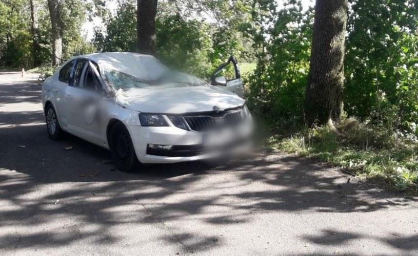 Drzewo runęło na samochód /Policja