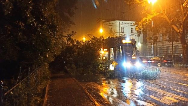Drzewo spadło na tramwaj linii 24 na ul. Westerplatte w Krakowie /Rafał Olszewski /Gorąca Linia RMF FM
