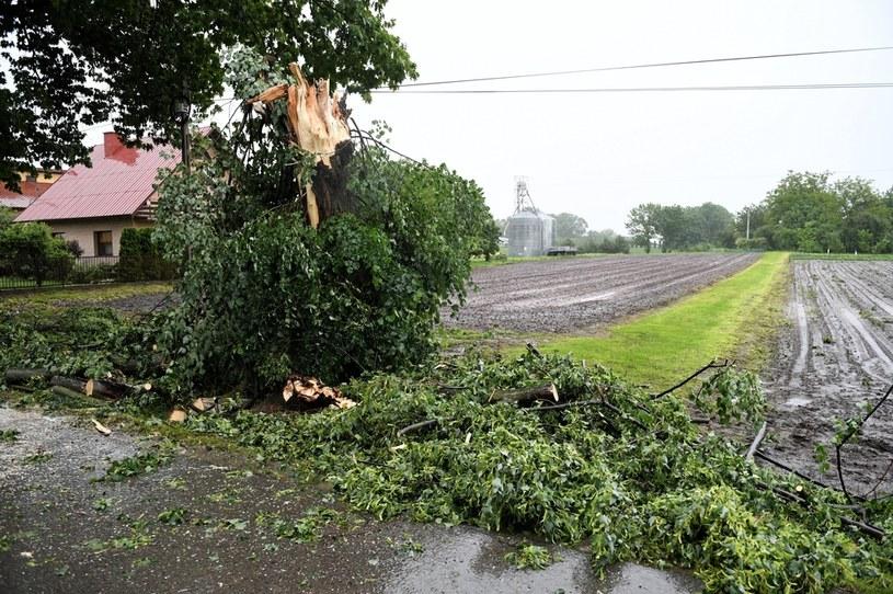 Drzewo w Nizinach (woj. podkarpackie) złamane w trakcie intensywnych wyładowań atmosferycznych /Dariusz Delmanowicz    /PAP