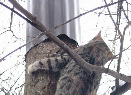 Drzewo zabezpieczone kołnierzem z blachy /INTERIA.PL
